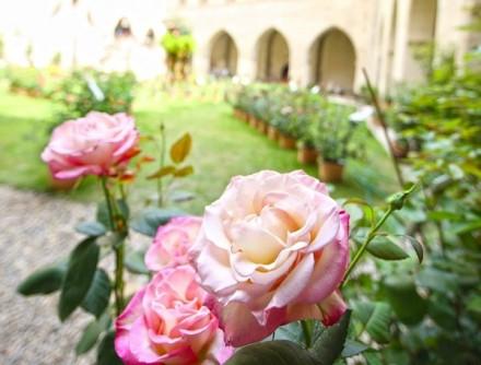 阿维尼翁玫瑰节